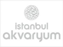 istanbul-akvaryum