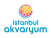 istanbul_akvaryum